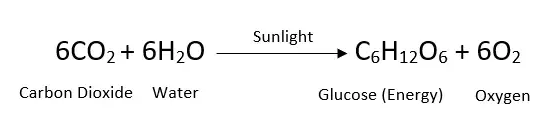Balanced Equation Of Photosynthesis